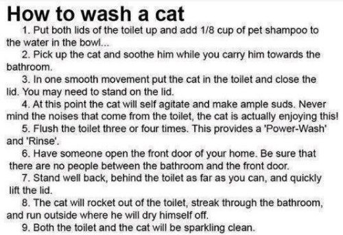 How to Wash a Cat and Toilet at the Same Time