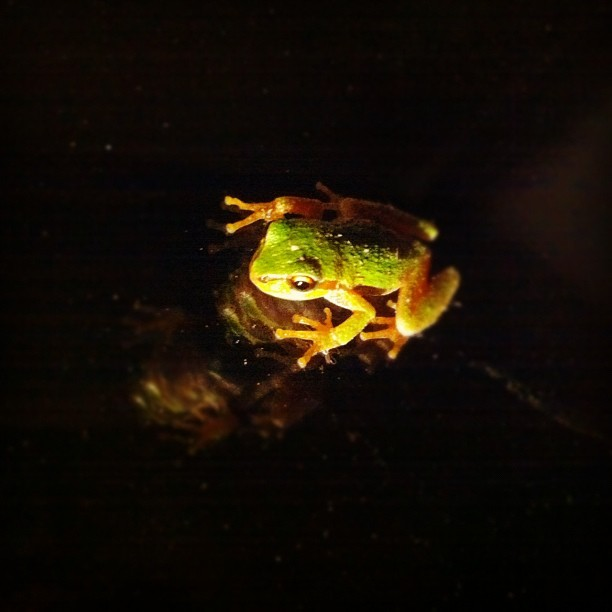 Frog (Taken with Instagram)