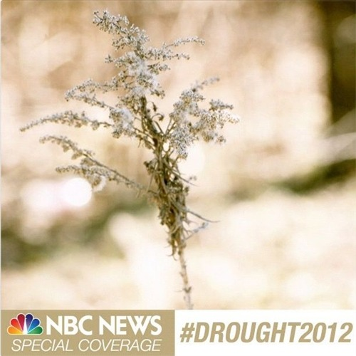 Americans tell their story of #Drought2012 (Photo: Sarah Coffey / NBC News) The United States is currently in the throes of the worst drought in more than 50 years. Special coverage begins Wednesday across the networks of #NBCNews. See some of the images and stories we have begun collecting from viewers and readers showing how the drought is affecting them.  Read the complete story and submit your own images.
