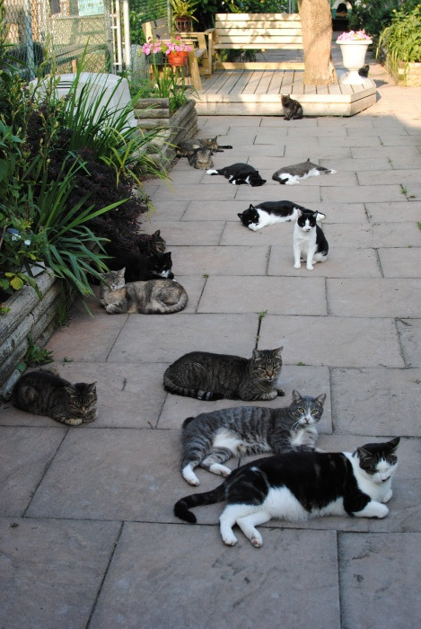 lol that's a lot of cats