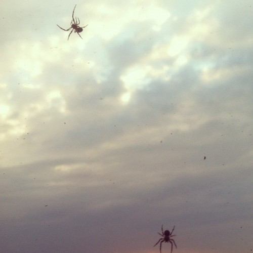 There are a LOT of spiders on this hotel… Gah!