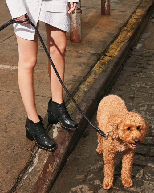 tmagazine:  Boots - Proenza Schouler, dress - Proenza Schouler, leash - Bottega Veneta, dog - adorable.More must-haves from our fall women's issue online now!