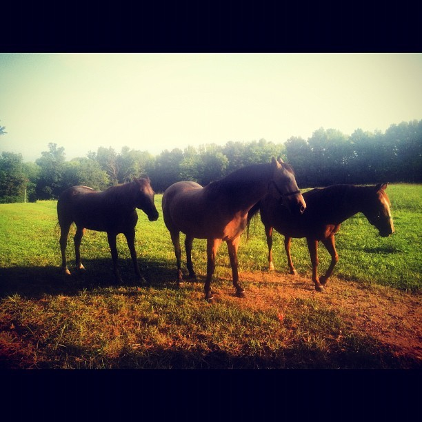 More Horses!! (Taken with Instagram)