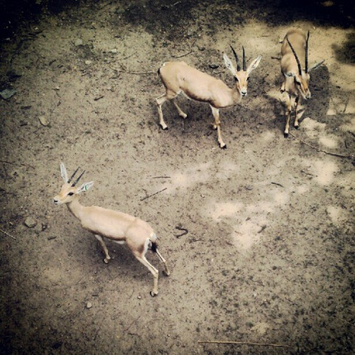 Taken with Instagram at Bronx Zoo