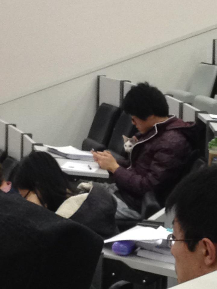 aepocrypha:  fish-and-swallow:  theclearlydope:  Cat finally made it to class. bunnyfood:  (via Imgur)   you know we're doing something right when an overheard @ vic post gets on tumblr  fuck yes