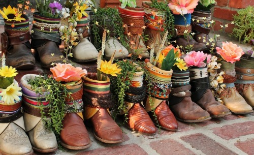vintage cowboy boots all in a row