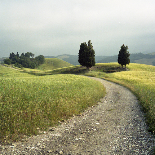 nelsoncarpenter:  crashinglybeautiful:  Murray Mitchell, Tuscan dirt road. Thank you litverve.