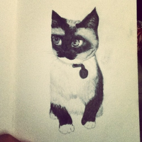 Cute kitten #cute #fluffy #kitten #drawing #pencil #sketch #illustration #art #illustrator #artist  (Taken with Instagram at Selby)