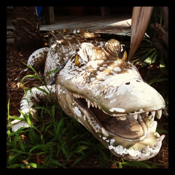 Wildlife (not really) (Taken with Instagram at Secret Spot Surf Shop)