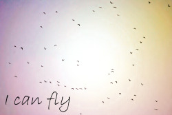 I can fly!     #dreams #fly #bird #power #energy