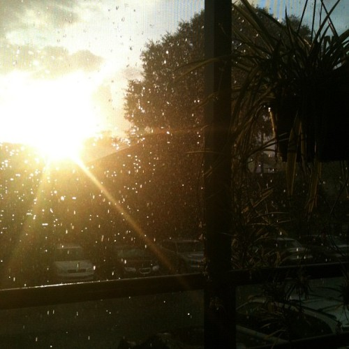 Sunny and pouring loving #florida  (Taken with Instagram)