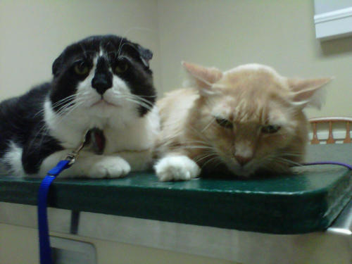 We hate the vet :( :( :(