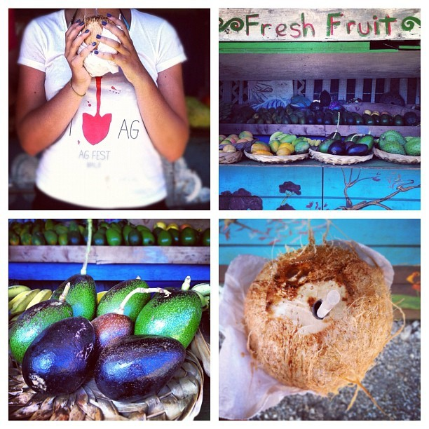 #farmersmarket #thecoconutexperience #fresh #fruit #coconut #mango #avocado #lychee #foodporn #foodies #healthy #ig #igshots #picoftheday #photooftheday #kauai #hawaii #instadaily #iphonesia #iphone #nature #beautiful #awesome #composition #iphonography #all_shots #instagramers #instahub #instanature (Taken with Instagram)
