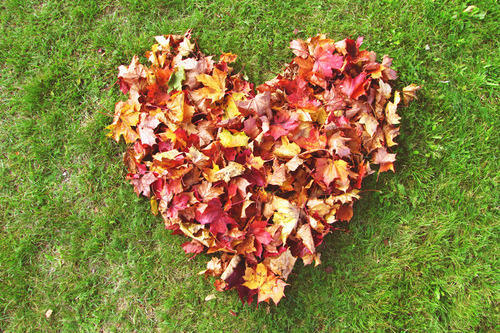 tell me how much you love fall, or your favorite part, and pass it on? :)