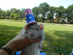 Bailey wearing an Uncle Sam hat for July 4th!!
