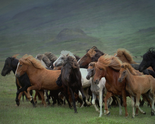 marsgirrrl:  The herd by Sverrir Thorolfsson on Flickr.
