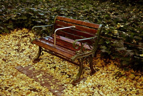 Bench and Gingko Leaves by megawheel360 on Flickr.