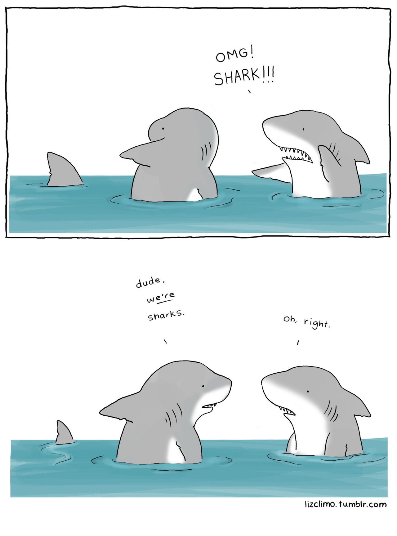 lizclimo:  happy shark week