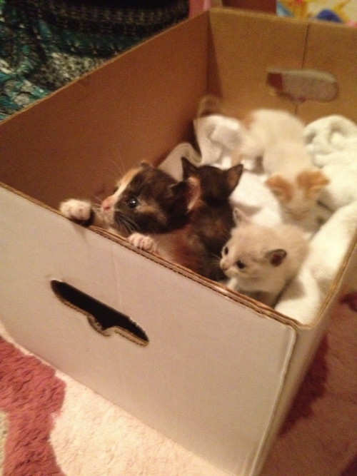 box full of kittens  画