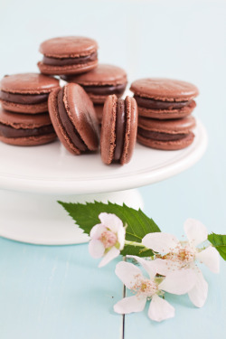 wouldyoulikecakewiththat:  Chocolate Macarons