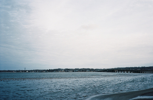 Flock Of Birds, Navesink River /// Locust, NJ /// March 2011