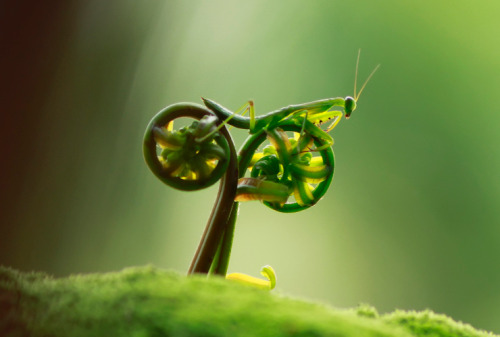 experimentsinmotion:  Bug on a Bike Tustle Ico is an Indonesian photographer who photographs bugs, doing interesting things. In this case life imitates art. (Via 500px)