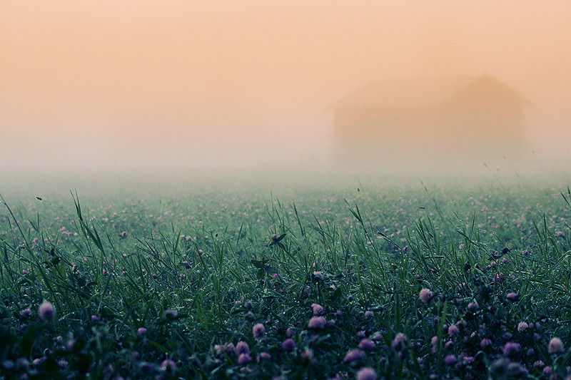 symphony-of-the-elements:  Mist by *RobinHedberg