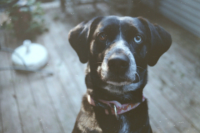 passare:  Penny by amandaarns on Flickr.