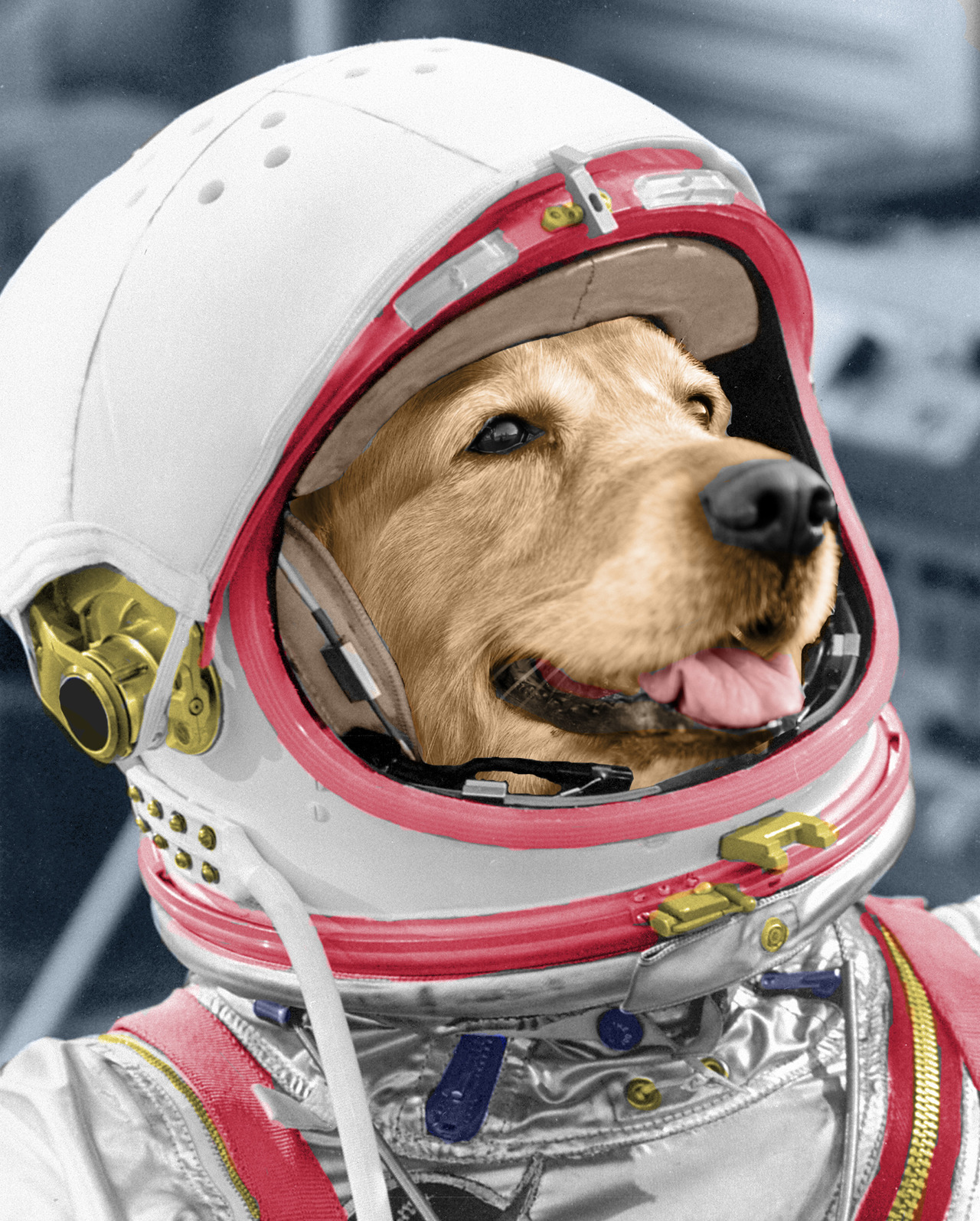 "fakescience:  Rover, the second Space Dog, is the reason we call space robots ""rovers"" today. Sadly, Rover died due to an ejector seat malfunction. Pay tribute to him by buying Fake Science 101. It's our completely new textbook. It's 272 pages. Full color. Cheap. And it will make you smart. We promise to start spamming about it less. But don't take our word that the book is worth your time. Learn more at Slate, Mental Floss, Forbes, Splitsider, the Huffington Post, Laughing Squid, Mashable, Business Insider, Geeks Are Sexy, Daily Dot, It's OK To Be Smart, Real Clear Science, and more. Or listen about it on the Smart People Podcast or Geek Speak Radio. You can also read our AMAA on Reddit. Thanks for tolerating our spam. None of this would be possible without you—really. We have scientifically proven that our readers are the best. And thanks for making the right decision. For Rover.  so cute"