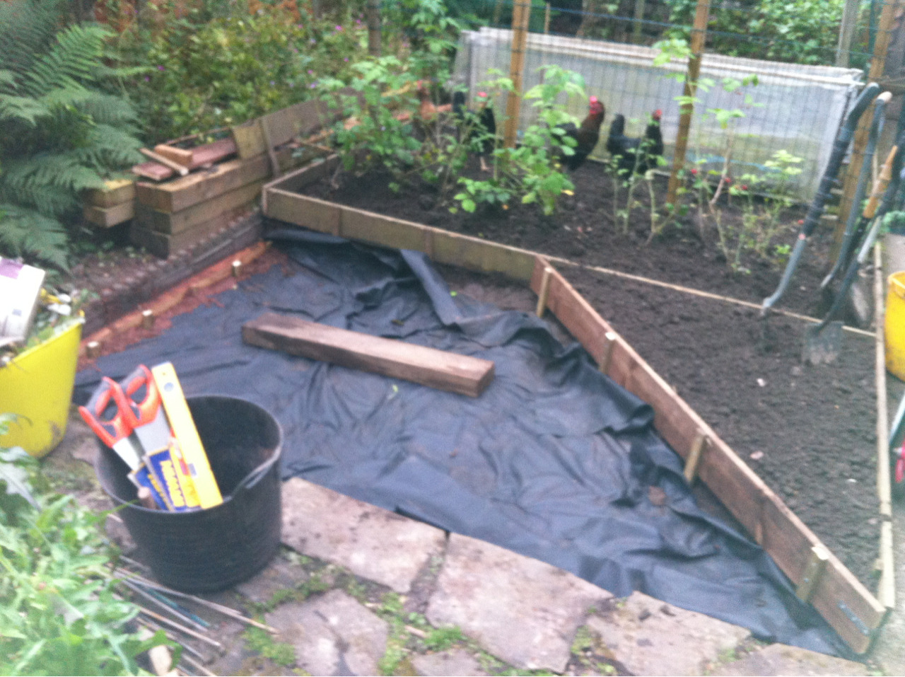 Preparations for the earth oven have started apace. Mr Greedy Gardener doesn't do things by halves and I'm really busy with some gainful employment so he is doing all the labouring and I'm offering encouragement and aesthetic guidance from a safe distance. The raspberries have been relocated and the chickens excluded. The small triangular bed will be planted up later, probably with herbs. A double layer of weed proof membrane is on the soil and will be covered with gravel. The oven itself will sit to the left.