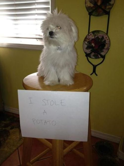 dogshaming:  missbananafish