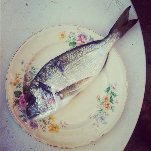 Still life with Baka's China and Today's Catch. #seaside #silba #croatia #summer2012  (Taken with Instagram at Kod Rodić)