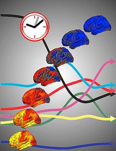 Brain Scans Don't Lie About Age ScienceDaily (Aug. 16, 2012) — It isn't uncommon for people to pass for ages much older or younger than their years, but researchers have now found that this feature doesn't apply to our brains. The findings reported online on August 16 in Current Biology, a Cell Press publication, show that sophisticated brain scans can be used to accurately predict age, give or take a year. Continue Reading