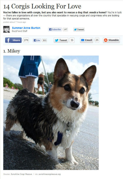 malicedesire:  All of these Corgis are looking for a forever home!   Check out these corgis that are up for adoption! CORGI LOVE!!!