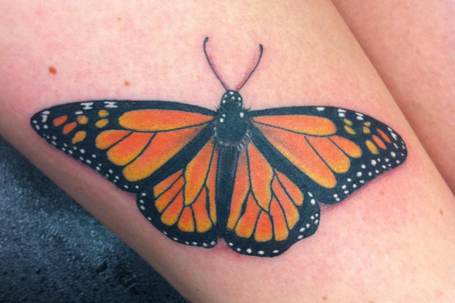 Monarch Butterfly done at Horns and Halos Tattoo in Sherman Oaks California.