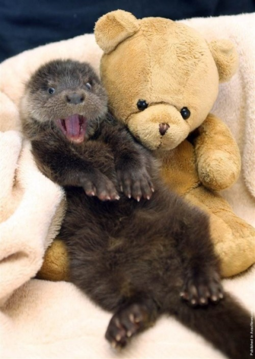 llbwwb:  You Otter Hug me:) via:cutestpaw