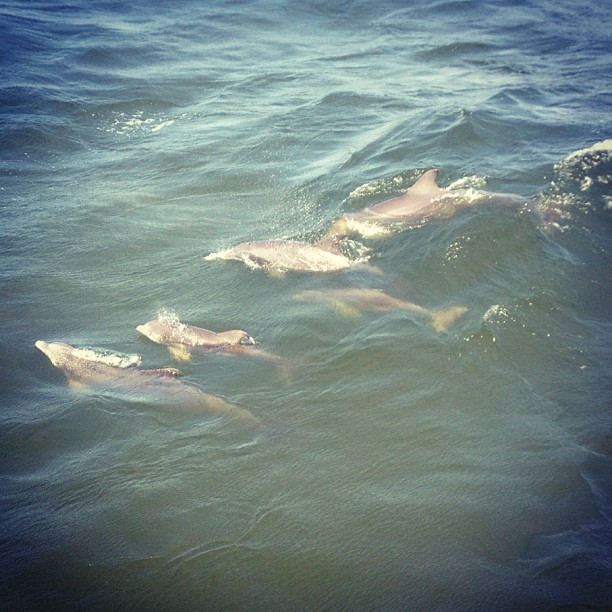 DOLPHINZ 😱💗🐬 #florida #omg (Taken with Instagram)