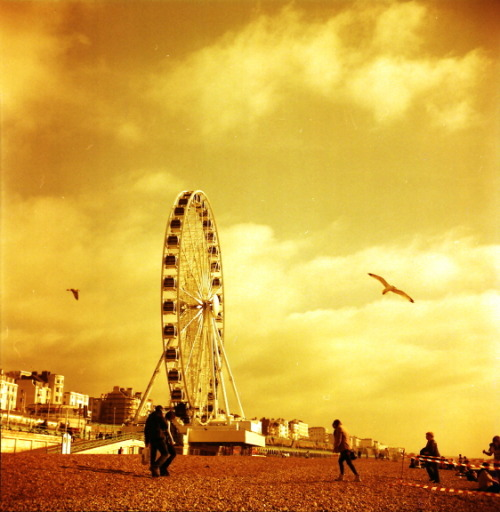 lomographicsociety:  Lomography Camera of the Day - Seagull 4A Get your cameras online!  J