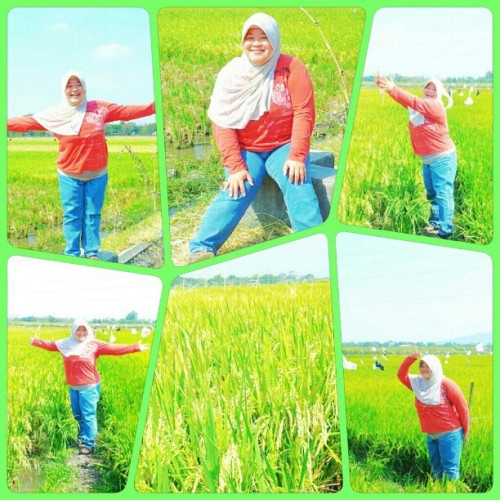 #padang #padi #rice #field #green #beautiful #Indonesia #instagram #instaphoto #instaworld #android #androidphoto #pingram #pingramme #hellogram #instadaily #instacnvs #photooftheday #instago #instagramers #picoftheday #instacanvas #instadaily #instagramhub #gf_daily #gang_family #extragram  (Taken with Instagram)