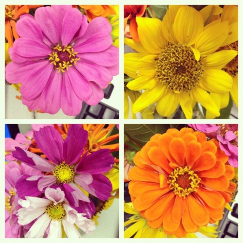 8/17: Faces. Flowers can have faces, right? #POTDaug #flowers #beautiful #farm  (Taken with Instagram)