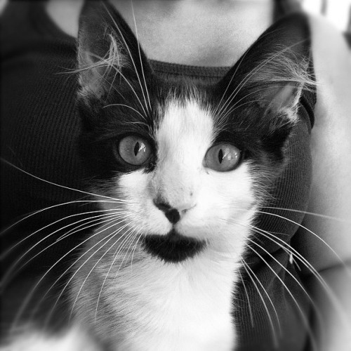#cat #igers #istanbul #iphonesia #catstagram #photitos #bw #portrait  (Taken with Instagram at Rönepark)