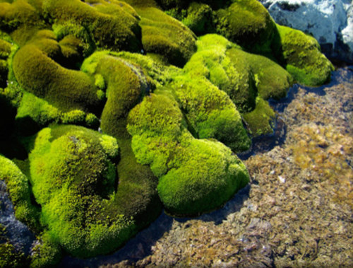 "Antarctic Moss Lives Off Penguin Poo The moss grows in the Antarctic summer and can be an indicator of climate change. Using nitrogen analysis of the soil, scientists found nutrients from seabirds' waste entering the plants. ""They form these big turfs of bright, almost fluorescent green. It is really soft and velvety to touch, and warms with the sun. It's quite a lot warmer than the air,"" said plant biologist Sharon Robinson. keep on goin…"