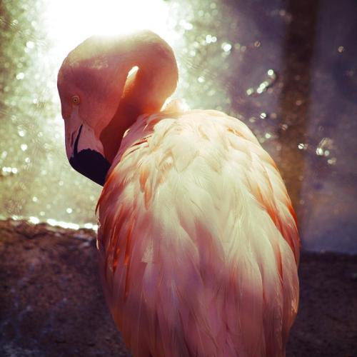 earthandanimals:  Flamingo. Photo by Jason Carne. *Please do not remove credit or change the source. This text will most likely not even show up on your blog.*