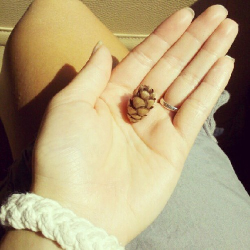 Smallest pinecone I've ever seen #cute  (Taken with Instagram)