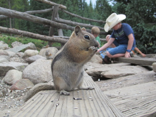 more chipmunks lol
