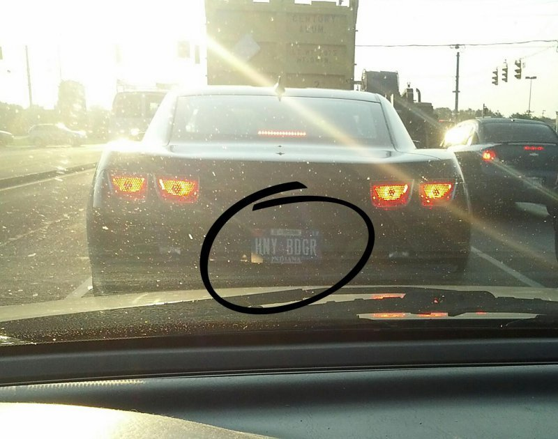 collegehumor:  Car Has Honey Badger License Plate This car don't care.