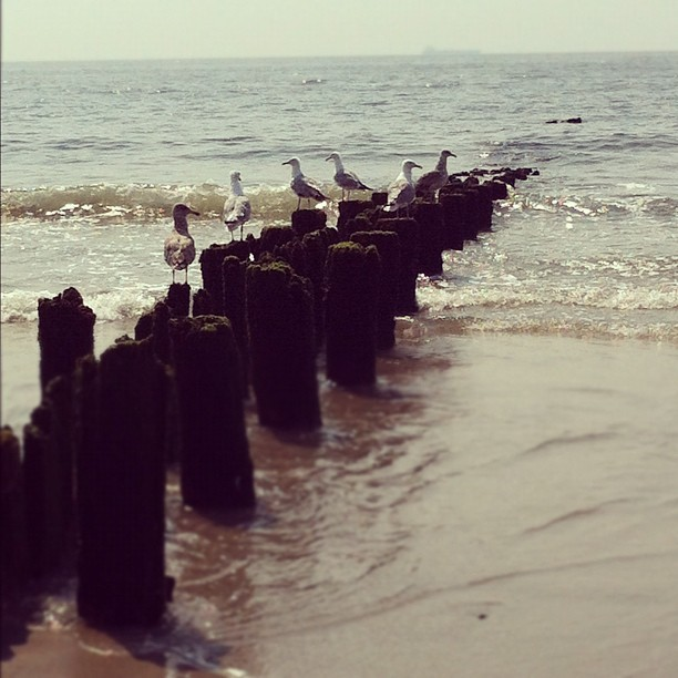 #seagulls #ocean #beach  (Taken with Instagram at Rockaway Beach - 98th Street)