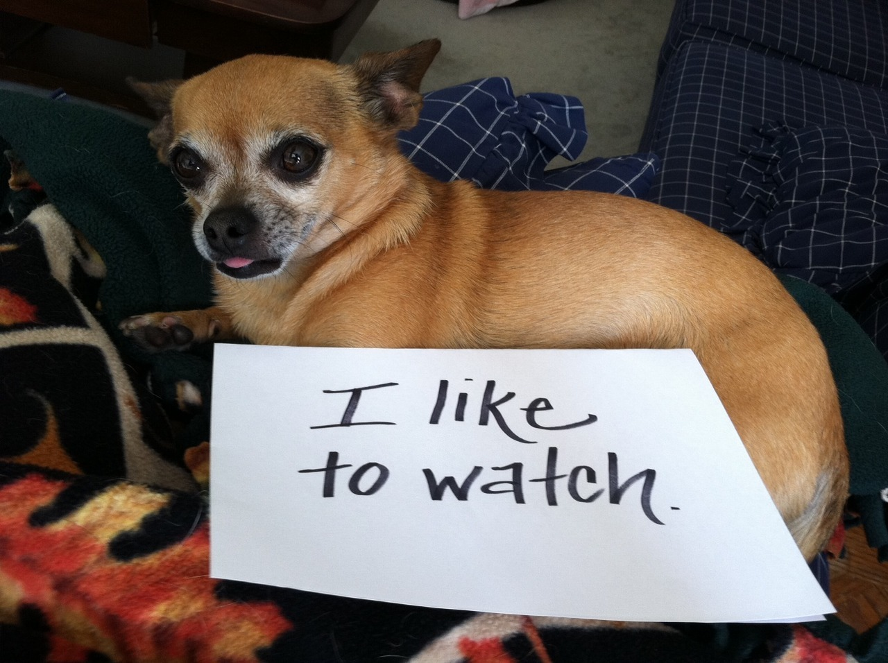dogshaming:  sick