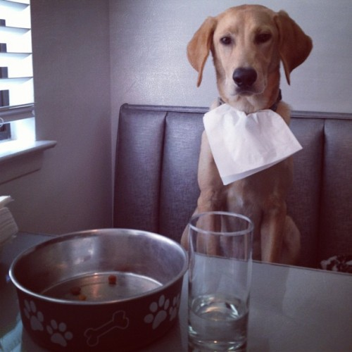 nobigdealvatzever:  #lunch with Denver. #puppy #dog #lab #food (Taken with Instagram)  We want to eat lunch with this guy!