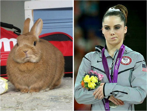 tastefullyoffensive:  Unimpressed Bunny[via]